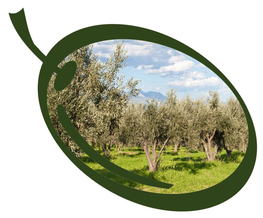 ATHOS_OLIVE-olivetrees